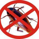桂林灭老鼠灭蟑螂灭四害除白蚁