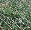 供应边坡防护用菱形网河北供应商/边坡防护菱形网/镀锌菱形网