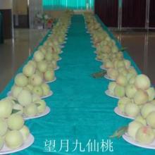 供应广东绿色名果九仙桃