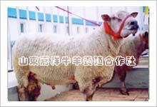母牛产犊后奶水不足怎么办_山东嘉祥牛羊养殖