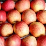 山西红富士苹果/山西套袋红富士苹图片
