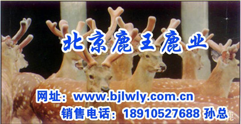 供应梅花鹿养殖业发展,梅花鹿种鹿价格,梅花鹿鹿产品销售,梅花鹿肉