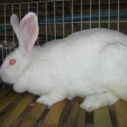 供应獭兔铁笼子价格