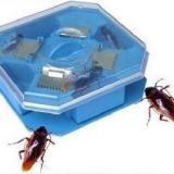 供應蟑螂捕捉器強效滅蟑螂都抓光