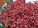 供应用于种植的山西优质大红袍花椒苗价格,花椒苗,花椒苗电话
