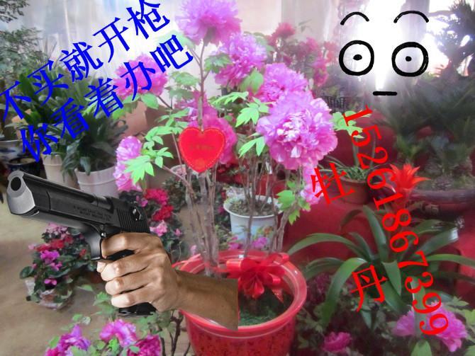 供应南京花卉鲜花