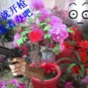 南京花卉鲜花图片
