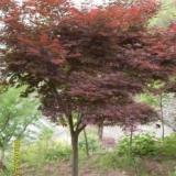 供应树木冬季防护带,