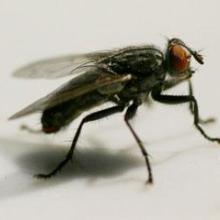 灭苍蝇服务报价