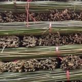 供应新鲜菜架竹