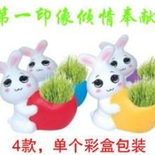 供应桌面舒压小植物DIY栽培乖乖兔