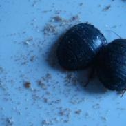 邯郸土元养殖除粉螨的具体方法图片