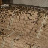 供应邯郸种蝎清水蝎厂家价格、种蝎、孕产蝎、商品蝎、清水蝎、盐水蝎、淡水蝎养殖供应