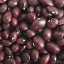 供应紫色芸豆