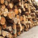 上海木材进口报关公司图片