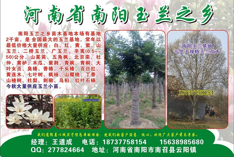 供应七叶树3到12公分
