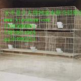供应鸽子笼兔子笼鸡笼厂家鹌鹑笼兔笼