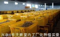 供应挣钱新商机武汉兴农种植业