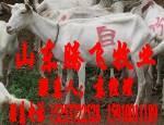 马头高产奶羊供应