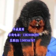 广州哪里买狗比较有保障图片