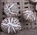 段木香菇图片