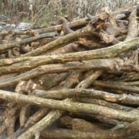 供应高山小叶黄杨木材/雕刻用黄杨原木