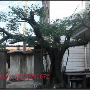 德州塑石仿木图片