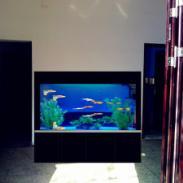 武汉盘龙城鱼缸图片