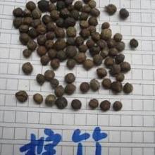 供应花木种子 棕竹种子 树木种子 竹类种子
