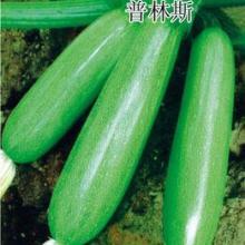 供应西葫芦种子代理★北京西葫芦种子价格★蔬菜种子公司批发