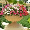 哈尔滨花盆花钵图片