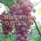 供应陕西红提葡萄基地红提葡萄批发价格