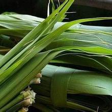 供应白洋淀芦苇叶批发,白洋淀芦苇叶批发价格,新鲜白洋淀芦苇叶批发批发