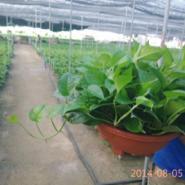 广州园艺公司,租花价格, 园林绿化造景,苗木、花卉经销
