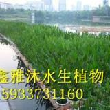 供应秦皇岛浮岛种植公司,首先鑫雅沐水生植物种植专业合作社