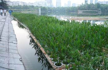 供应鹤壁浮岛种植,浮岛制作公司,浮岛种植价格,浮岛销售批发供应商