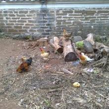 丽水市土鸡蛋、农家土鸡蛋供应商热销批发价格批发