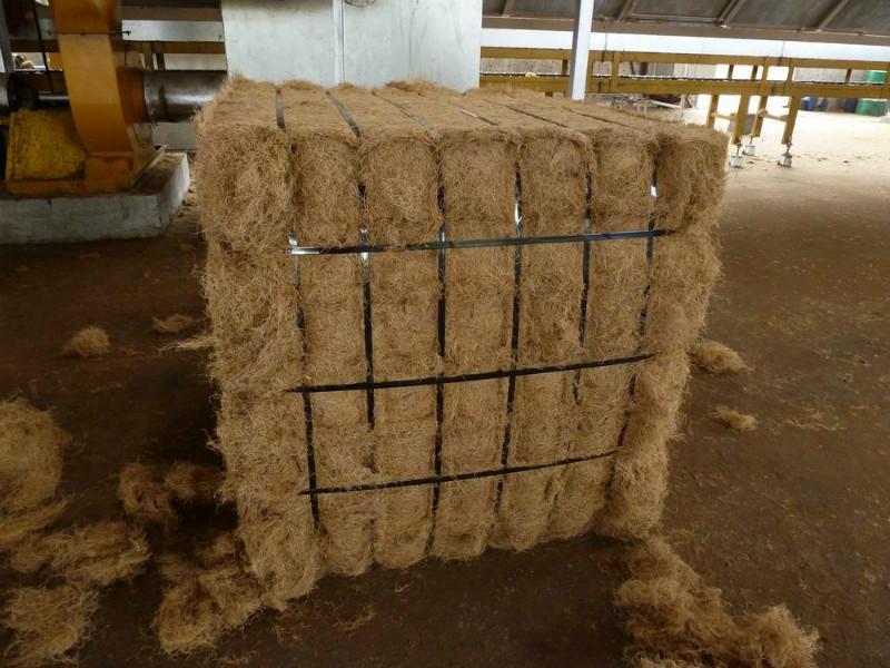 高质量油棕丝马来西亚进口优质棕丝