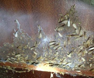 供应灭蟑螂的方法中心,灭蟑螂的方法电话图片