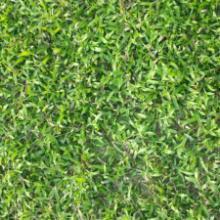 供应草坪,草皮,草坪价格,草坪基地,草皮基地