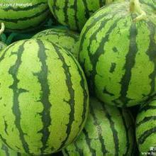 供应西瓜新行情销售西瓜产地价格 西瓜种植 西瓜供货商图片
