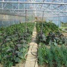 供應橫崗蔬菜配送粵崗配送新鮮蔬菜圖片