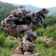 江苏淮安太湖石图片图片