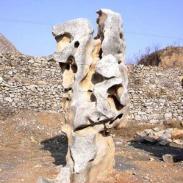 浙江舟山哪里的太湖石最好图片