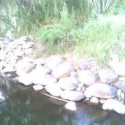 鹅卵石水冲石多少钱图片