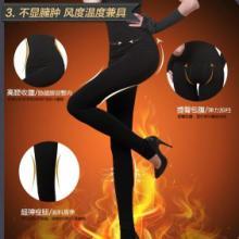 供应保暖裤,保暖裤价格,女式保暖裤,女士打底裤,男士不倒绒保暖裤