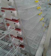 供应鹌鹑养殖设备厂家,山东鹌鹑养殖设备,鹌鹑养殖设备哪里有卖批发
