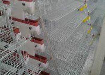 鹌鹑养殖设备图片