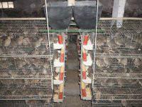 供应回收鹌鹑蛋