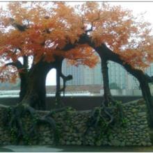 供应西安古梅树、供应延安、定边、吴起古梅树。